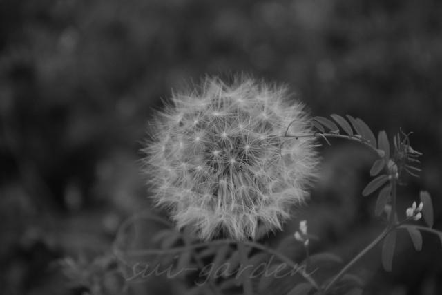 Garden040