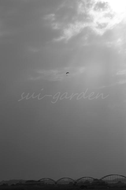 Garden154