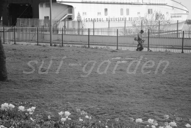 Garden297